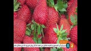 Iran Organic Strawberry greenhouse, Neyshapour county گلخانه توت فرنگي شهرستان نيشاپور ايران