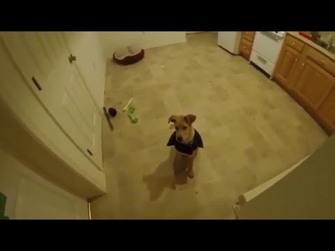 Puppy Tips - Leaving Your Puppy Behind a Door: Keeping Him in the Room