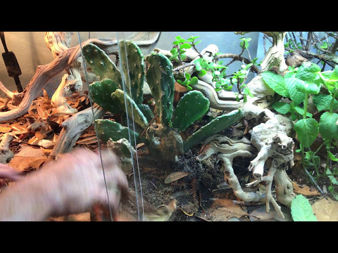 How to setup a BioActive Bearded Dragon terrarium - Self cleaning & maintaining