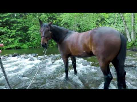 Benny the Standardbred :Training Part 5, Practicing Groundwork in Water and Acclimation