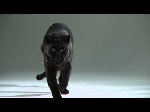 Duality Redux | Slow Motion Cats Phantom Camera Series