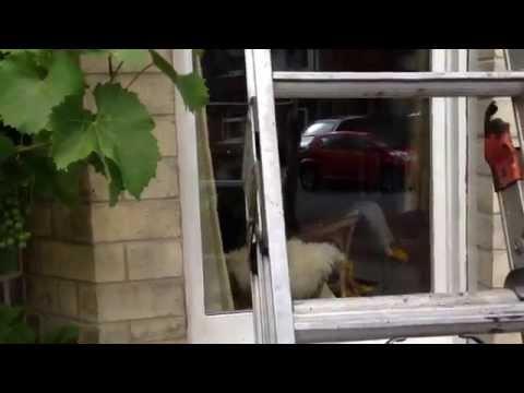 Window repair  replacing mortar