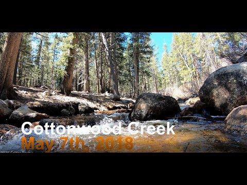 Cottonwood Creek Golden Trout