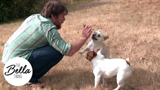 PUPPIES IN SLOW MOTION: Daniel Bryan plays with Josie and Winston!