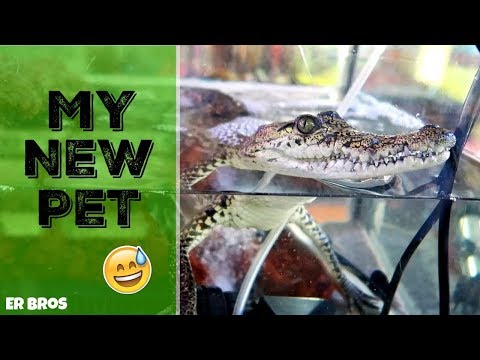 Exotic Pet Store In Mexico