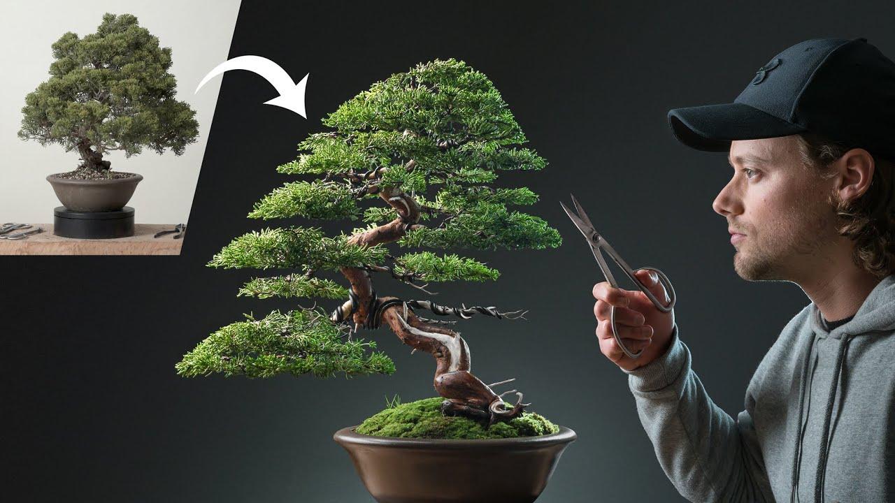 Restoring a Neglected Chinese Juniper Bonsai