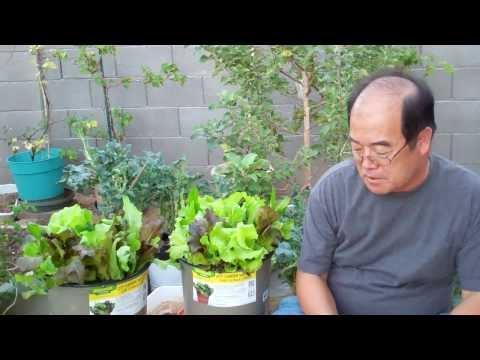 생활의지혜 가든샐러드 Garden Salad
