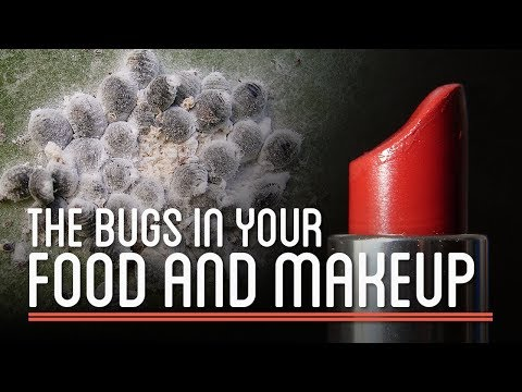 The Bugs in Your Food and Makeup | How to Make Everything