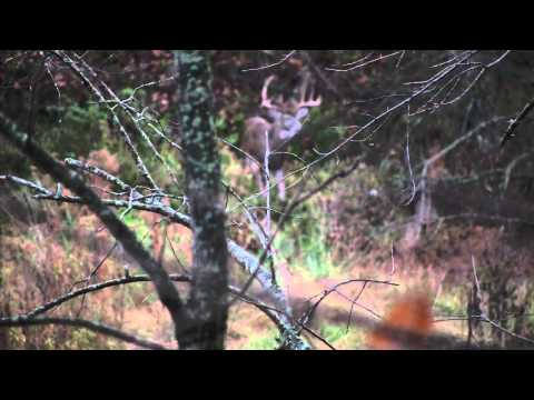 Giant Whitetail Deer at Grand Valley - 400 Acres Illinois Hunitng Land for Sale by Illinois Land Co