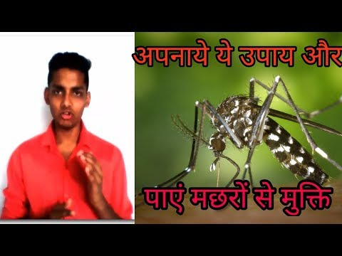 मच्छर भगाने के उपाय   मच्छर मारने के तरीके । मच्छर भगाने के घरेलु उपाय