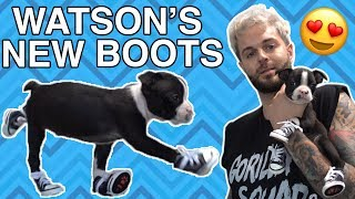 MY PUPPY TRIES SHOES FOR THE FIRST TIME! *CUTE*