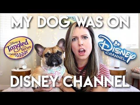 MY DOG WAS ON DISNEY CHANNEL