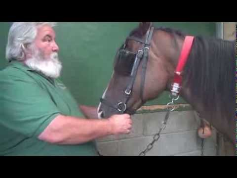 Why bitless and barefoot isn't always better - retraining a racehorse.