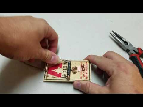 How to adjust a mouse trap properly.