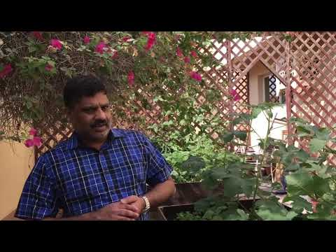 Remove pesticides from fruits and vegetables-malayalam