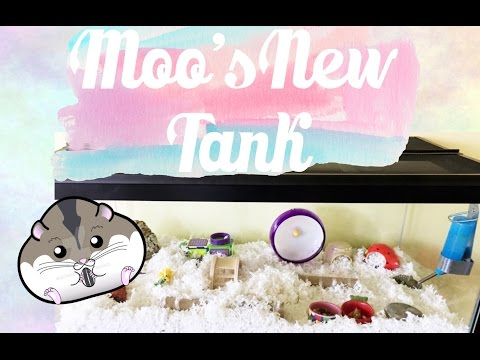 Moo Series: New Hamster Tank Setup, 40gal. Breeder