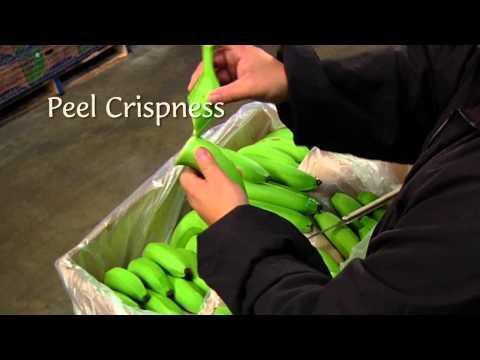 DOLE - Banana Ripening Process