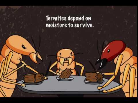 Termites In Arizona