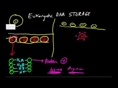 DNA Storage Basics