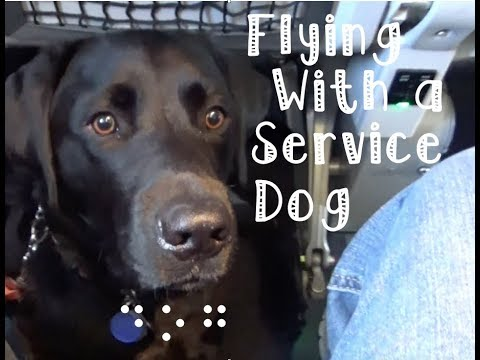 Air Travel with a Guide Dog : How Does a Guide Dog Fly?