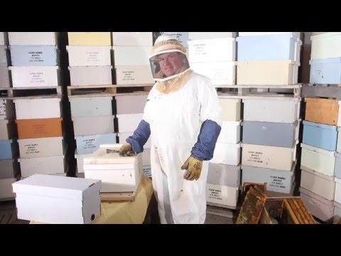 How To Install Bee Nucs • IFA Beekeeping Class 1