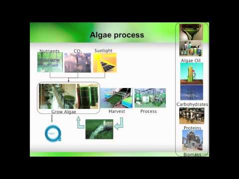 Algae Systems for CO2 Sequestration, Wasterwater Cleanup, and Generation of Sustainable Energy