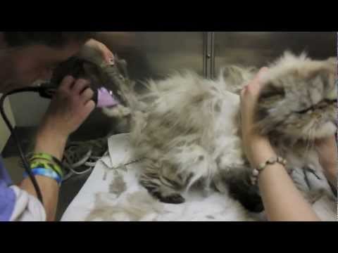 Cat Grooming - Extreme mats