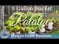 How to Grow Potatoes in a 5 Gallon Bucket (Part 2 of 2)