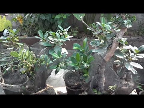 How to Grow Plants Faster | Easy Way to Grow | New Ideas September 2016 (Urdu/hindi)