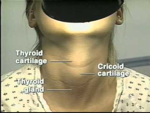 Lymph node, thyroid examination