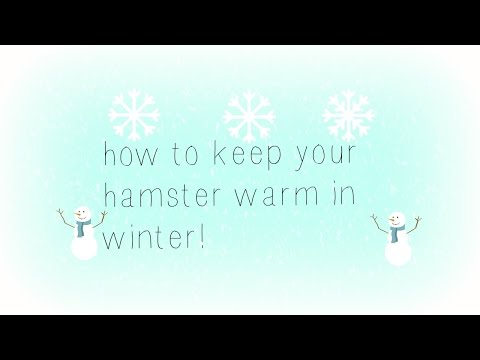 How to keep your hamster warm in the winter!!