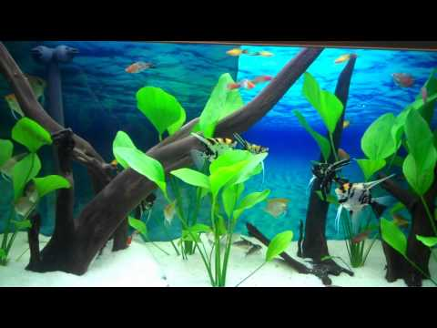 Clearview Aquarium Background Enhancer.wmv