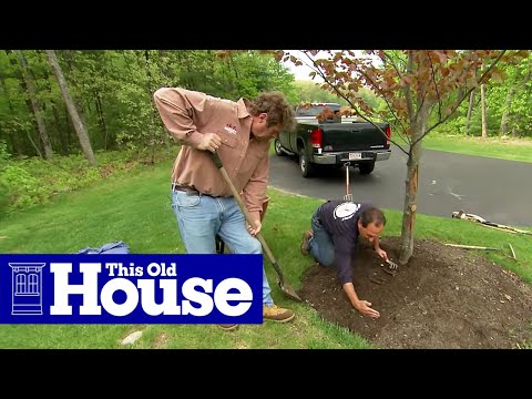 How to Properly Mulch Around a Tree | This Old House