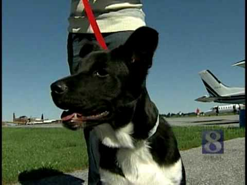 VIDEO: Group Flies Dogs To No-Kill Shelter