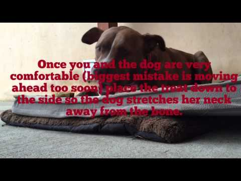 Building a dog's trust with bones and chews