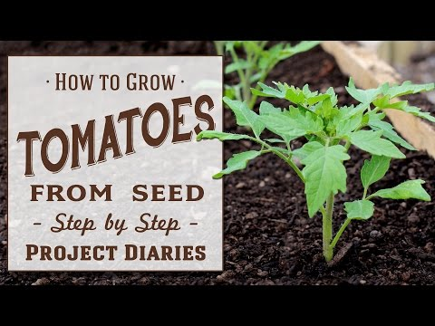 ★ How to: Grow Tomatoes from Seed (A Complete Step by Step Guide)