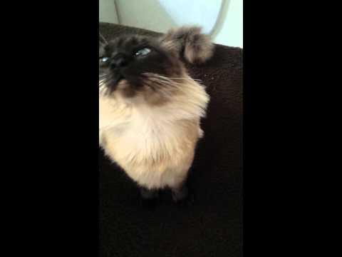 Cat in ecstasy