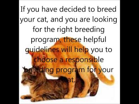 Things to consider before breeding your cat