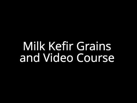 Milk Kefir Grains and Video Course