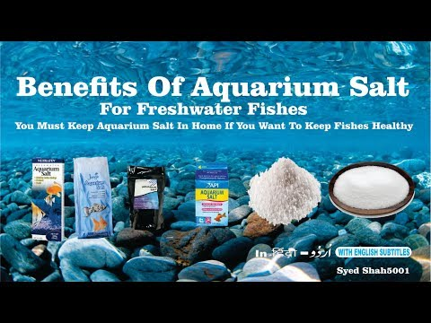 Benefit of Aquarium Salt for fishes  How To Use Aquarium Salt Aquarium salt tips and Tricks