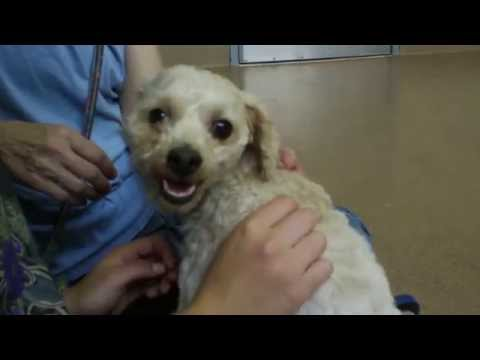 Choosing A Rescued Dog From The Animal Shelter, Part 1