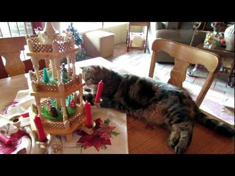 Gracie, Tobey and the Pyramid Tree