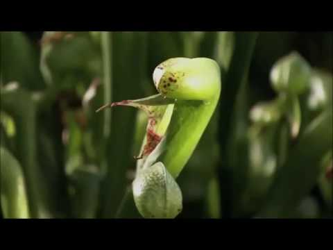 A Plant's World: The Intelligence of Plants