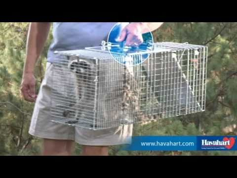 Havahart® Easy Set® Animal Traps - Humane Trapping at Its Best!