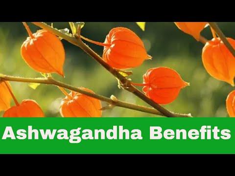 Ashwagandha Root Powder Benefits
