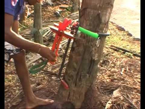 Advance Coconut Tree Climber