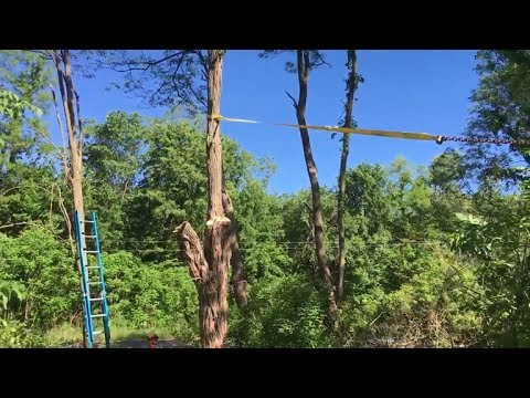 How to fell tree in direction you want by using tow straps/chains/truck