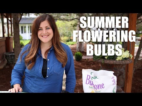 Summer Flowering Bulbs 🌸🌼🌺// Garden Answer