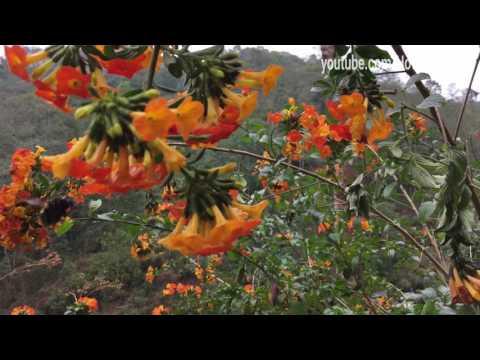 iPhone 6S 4K Video Sample