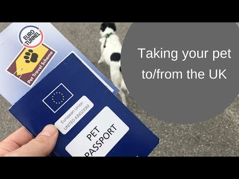Taking your pet abroad to and from the UK